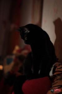 Кошка Няма на охоте
