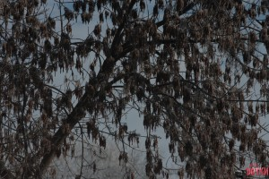 Липецкие Верхний Парк и Краеведческий Музей, которых не видно из-за дерева