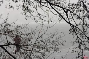 Не первый рыбка на первом льду на реке Воронеж, Липецк