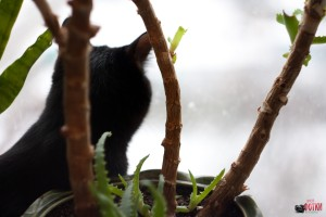 Кошка Няма наблюдает за жизнью за окном