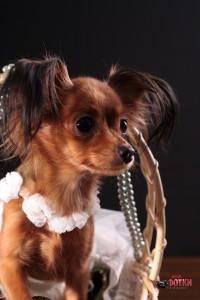Арина в костюме невесты, Липецк, ВкусноФотки.РУ