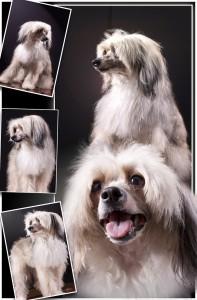 Сессия фото домашних животных Липецка - пуховка Джим Барри