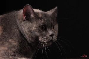 Другой ракурс - кошка Леля на липецкой фотосессии