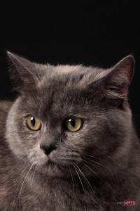 Глаза умной кошки Лели в объективе Юпитер-11, Липецкие фото